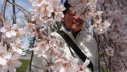 DC: Someone really special among the cherry blossoms