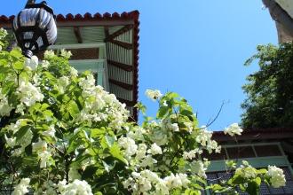 Flowering trees, Rizal Shrine, Calamba